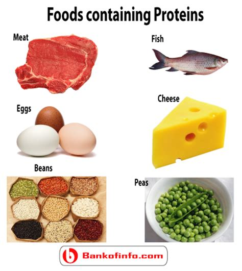 carbohydrates proteins fats and water are essential why are carbohydrates essential to the all about