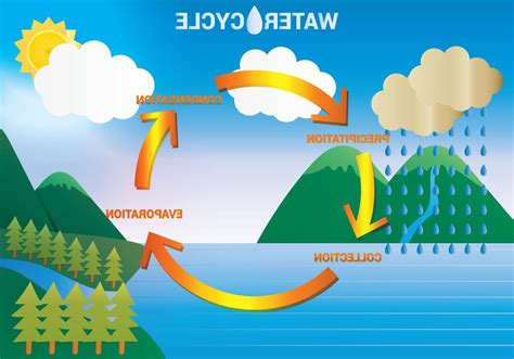 water diagram water cycle for water damage los angeles
