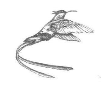doctor bird coloring page birds pencil drawings for sale buy birds artworks