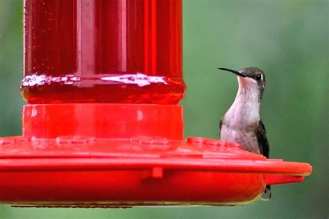 red dye in hummingbird nectar bad for birds