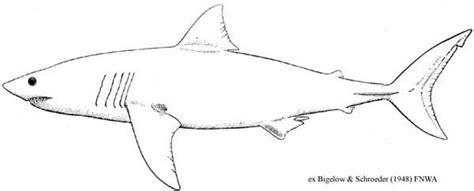 Magic Beach Shark Template Alison Lester Pinterest Templates And Sharks Great White Shark Template