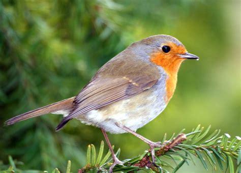 attracting backyard birds ideas to create a backyard bird sanctuary attracting wild