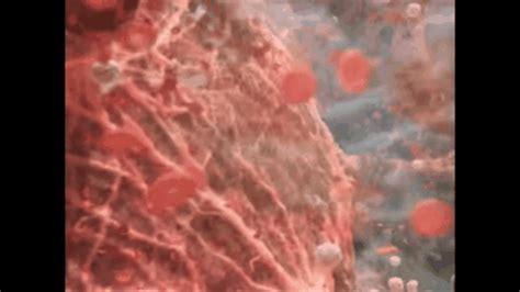 blood loss during c section as 237 es c 243 mo se alimentan los beb 233 s dentro del vientre de