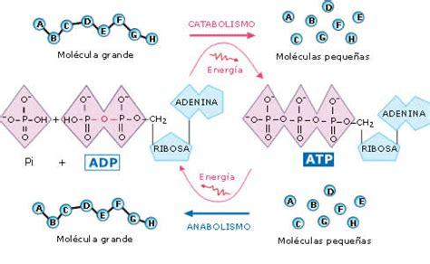 preguntas inteligentes para directivos educarchile procesos metabolicos