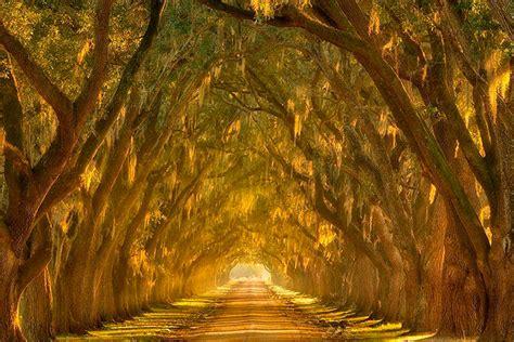 imagenes re geniales tuneles de arboles geniales y hermosos taringa