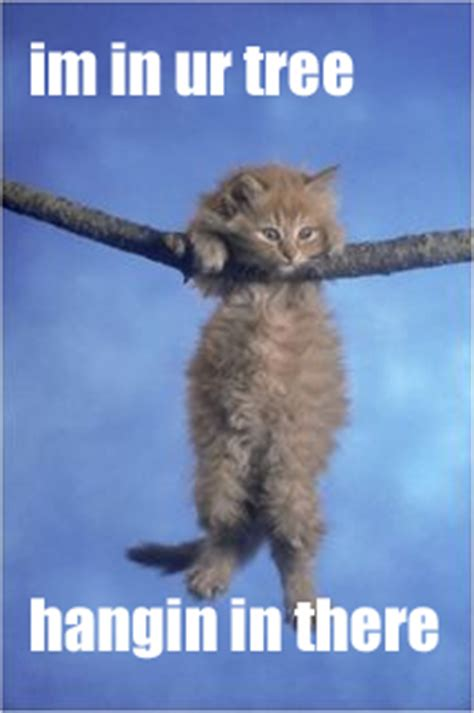 Hang In There Cat Meme - 301 moved permanently