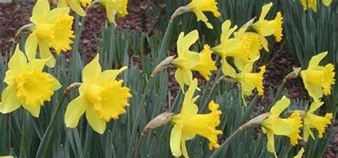 des fleurs en hiver arrosoirs et s 233 cateurs
