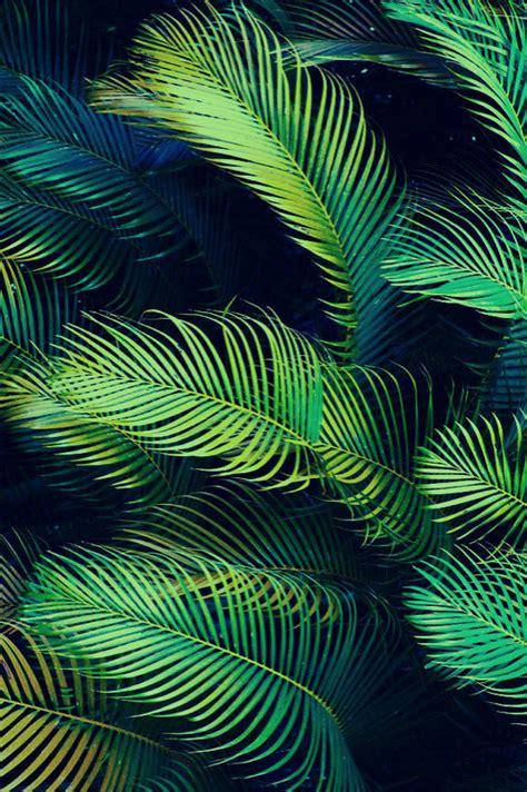 wallpaper tropical green photography cute adorable tree tumblr fashion beautiful