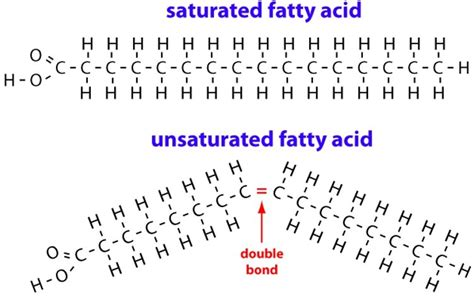healthy fats saturated or unsaturated fats healthy fats and unhealthy fats pmf ias