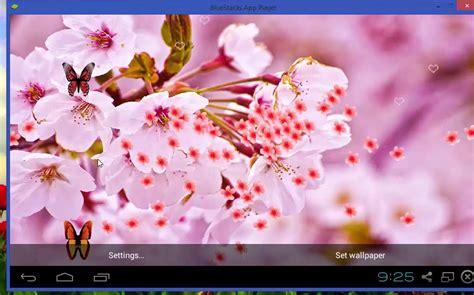 wallpaper live bunga sakura koleksi gambar download wallpaper bergerak bunga terbaru