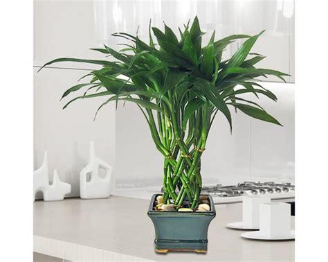 plantas  decoracion de interiores  curso de