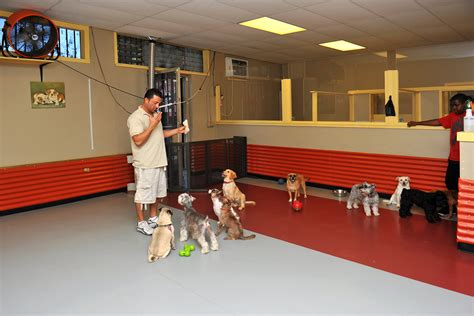 puppy daycare south park doggie dtla daycare and boarding