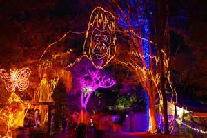 zoo lights az must see lights this year