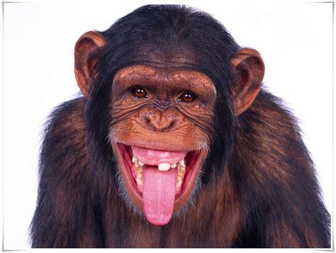 monyet nama gambar binatang