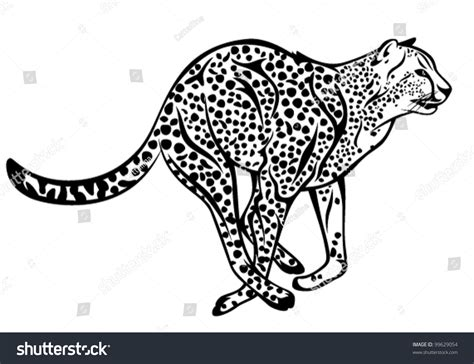 Running Cheetah Outline by Running Cheetah Vector Illustration Black And White Outline 99629054