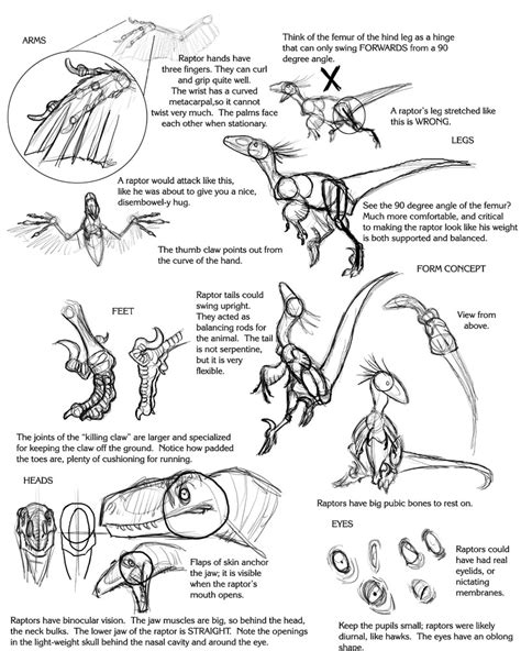 sketch your world drawing 1845435141 raptor tutorial by droemar on