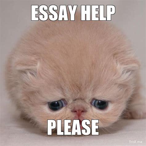 Essay Memes - help please essay will smith meme