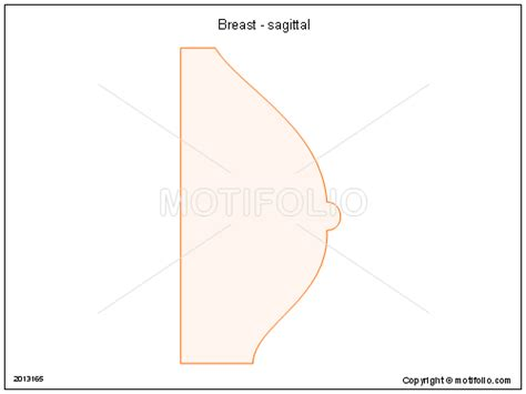 breast diagram drawing breast sagittal illustrations