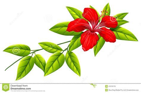pianta fiore rosso pianta con fiore rosso fiori idea immagine