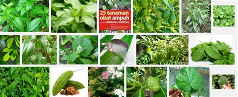 Diabenia Herbal Cepat Tuntaskan Diabetes Dan Penyakit 10 tanaman herbal untuk sakit diabetes kencing manis