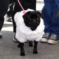 pug fur coat 1000 ideas about sheep costumes on animal costumes for costume shop