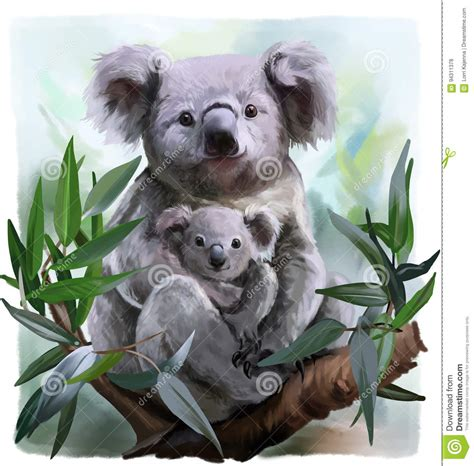 koala cartoons illustrations vector stock images