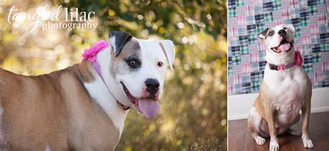 puppy adoption az giving back sedona wedding photography wedding photographers flagstaff