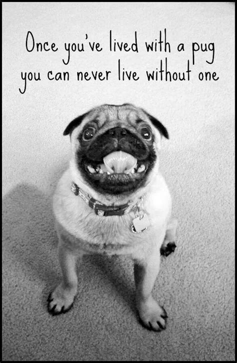 words with pug or should this go quot true words quot pugs the o jays pug and words