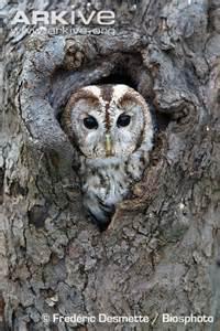 owl tree owl on a tree new calendar template site