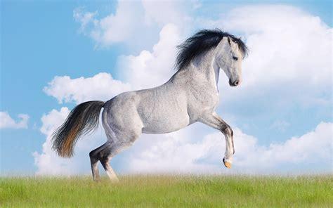 lovely white 1920x1200 lovely white horse artwork desktop pc and mac