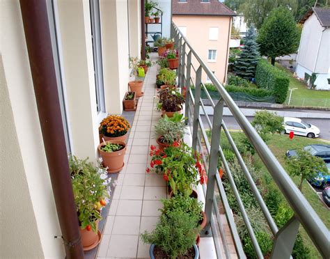 Gardening Ideas For Balcony S Veg Plot Fiona S Balcony Garden