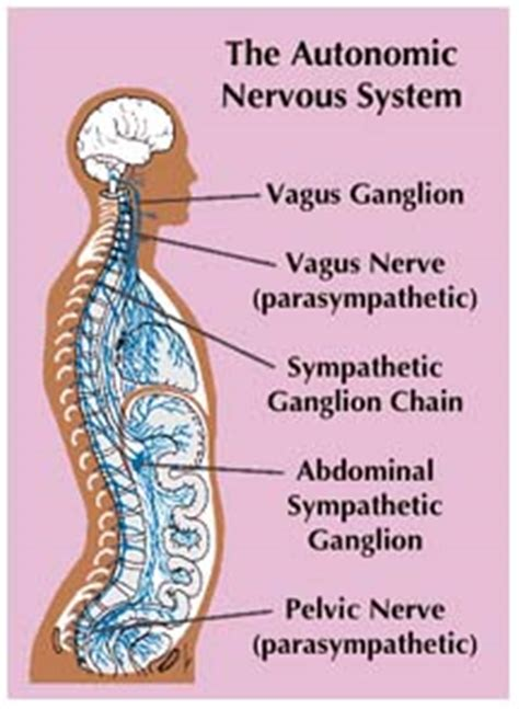 Detox Nervous System by Soqi E Power Negative Ions Energized And Detox The Cells