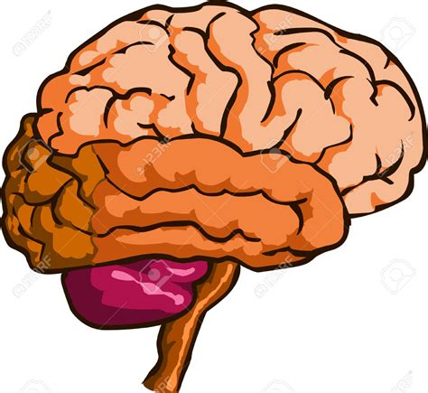 brain clipart cartoon brain clipart free 101 clip art