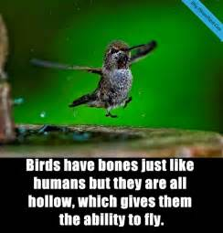 27 interesting facts about birds you may know