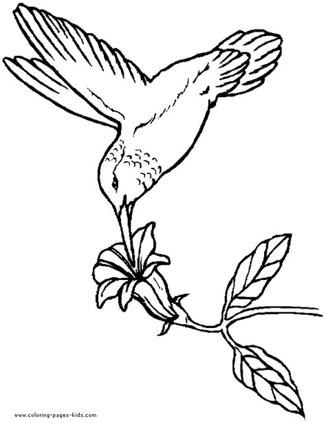 bird design coloring page birds coloring book page hummingbird coloring page for kids