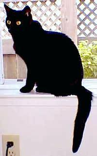 imágenes gato negro denunciando alguien conoce la religion wicca