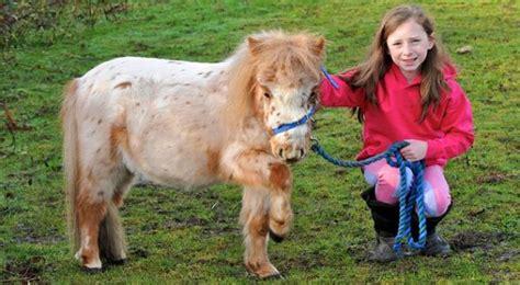 Bantal Cinta Kuda Poni suka makan pasir perut kuda poni ini jadi besar paling seru