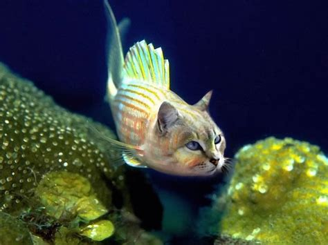 cool looking cool pictures top 30 cool funny fish wallpaper gallery