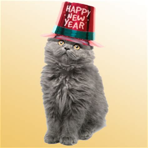 the year of the cat new year happy new year s from j jones chicago