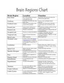 Basic parts of the brain and their functions 1000 ideas about brain
