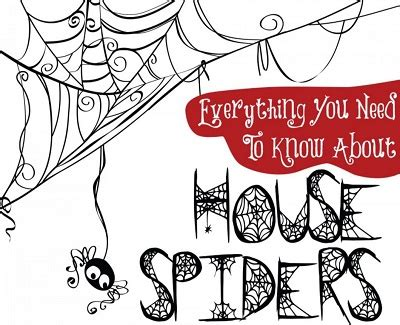 things you need for house everything you need to know about house spiders kravelv