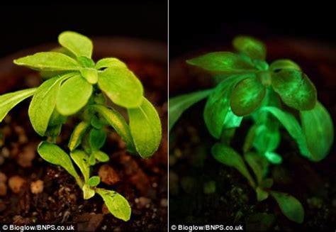 glow in the dark plants designer looks towards replacing street ls with glowing