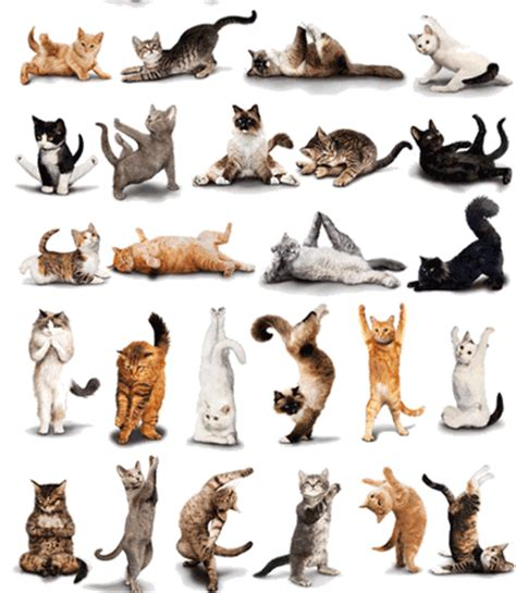 cat yoga wallpaper index of backgrounds animal