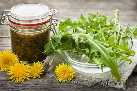 tarassaco in cucina erbe selvatiche in cucina propriet 224 e uso lifegate