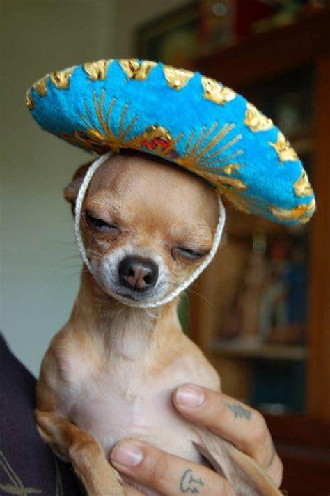 Mexican Sombrero Meme