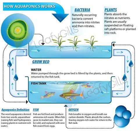 aquaponics diagram aquaponics system schematics images