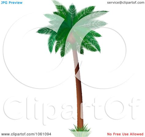 3d coconut palm tree with lush green foliage royalty