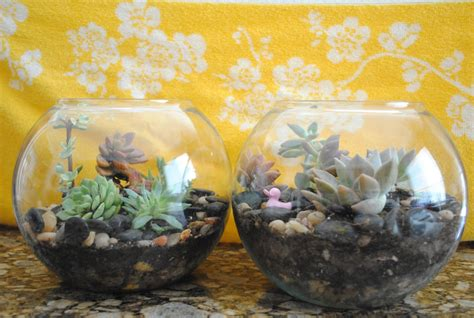how to make a succulent terrarium lil sprinkles