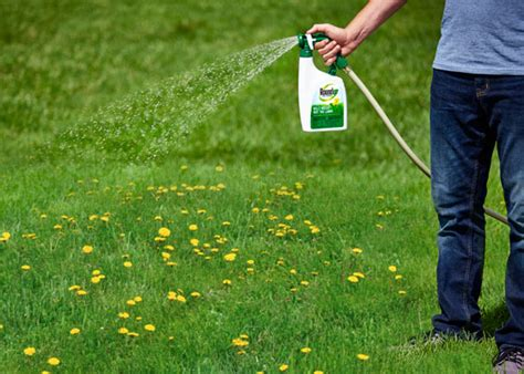 roundup for lawns how to kill weeds without killing your lawn garden club