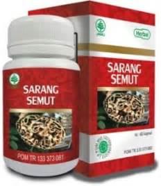 Sarang Semutteh Herbal Alami Papua herbal sarang semut papua i sarang semut asli i obat